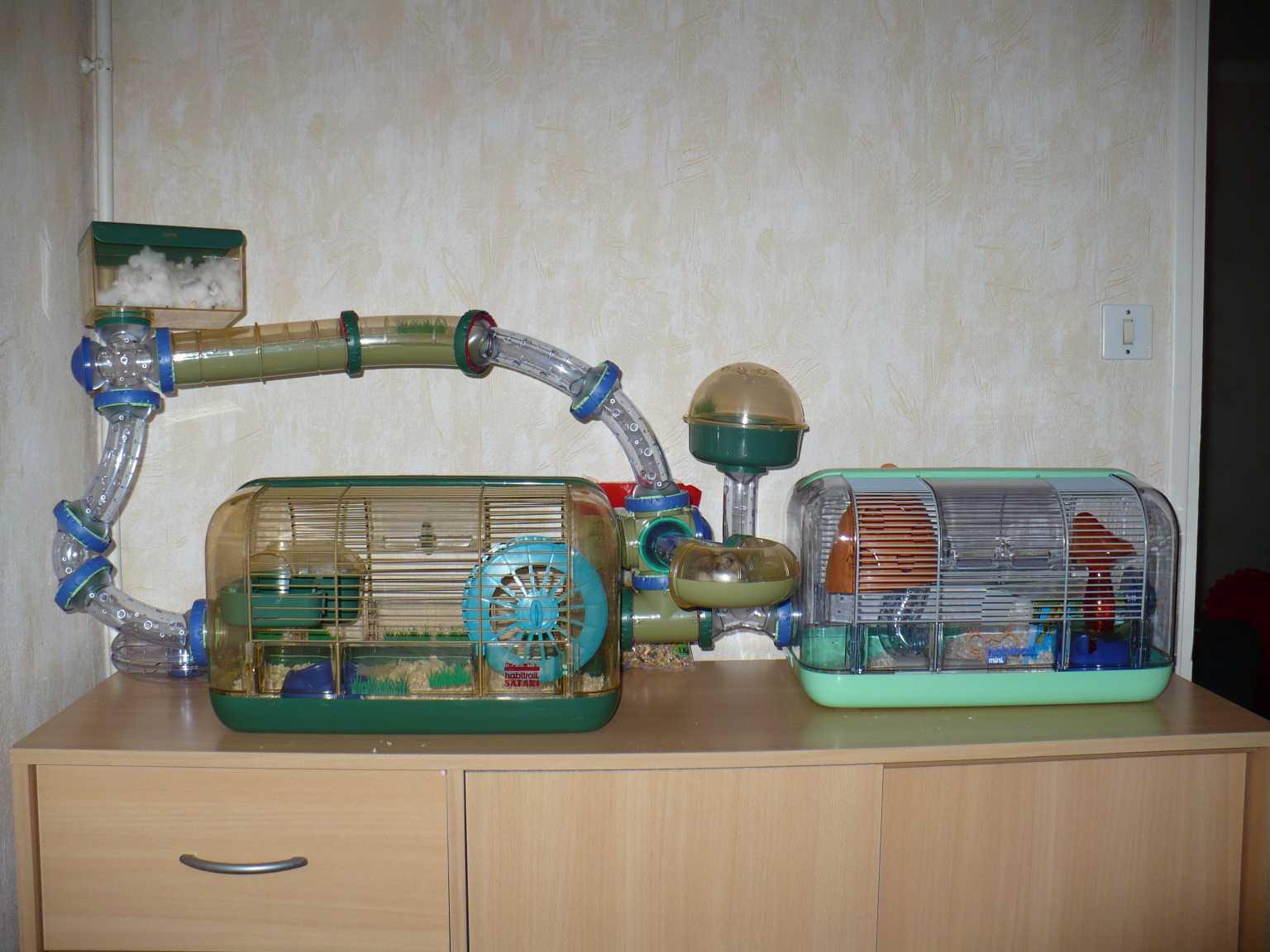 Donne hamster russe - La plus grande cage a hamster du monde ...